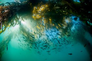 New Project: California MPA Monitoring Data Integration
