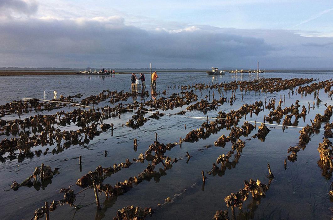 Ocean Acidification & Hypoxia